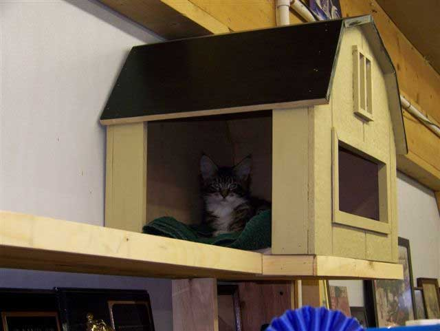 Cheyenne in her cat house.